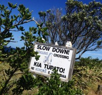 Slow down - Penguins Crossing!